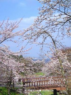 2010養老公園の桜 01