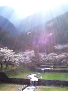 2010養老公園の桜_06
