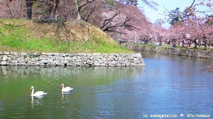 2010彦根城内堀_02
