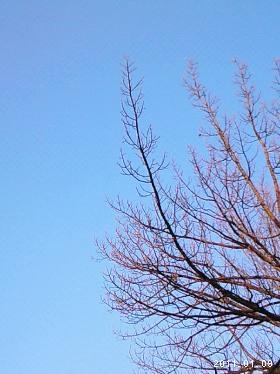 le09janvier2011上野天満宮
