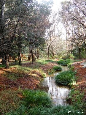 le10janvier2011_世界文化遺産_糺の森01