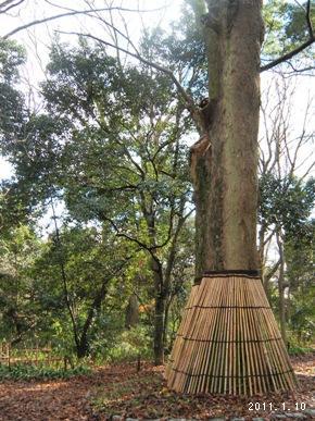 le10janvier2011_世界文化遺産_糺の森04