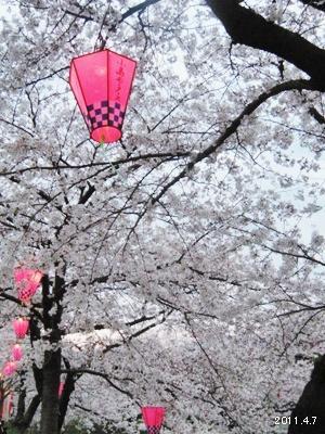 岩倉市_五条川の桜まつり07