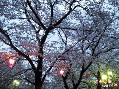 岩倉市_五条川の桜まつり09