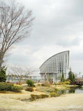 名古屋港ワイルドフラワーガーデンBluebonnet/ブルーボネット_サニーハウス
