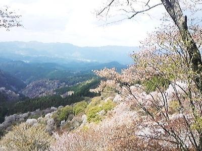 le19avril2011_奈良県吉野山 花矢倉より上千本の桜を望む