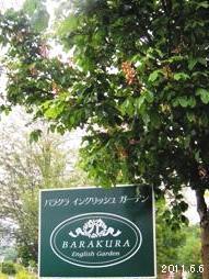 2011_蓼科高原バラクライングリッシュガーデン06