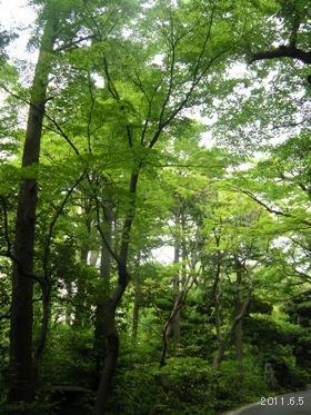 2011根津美術館庭園05