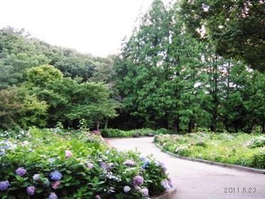 千種区茶屋ヶ坂公園_紫陽花01