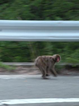 長野R153_05 猿
