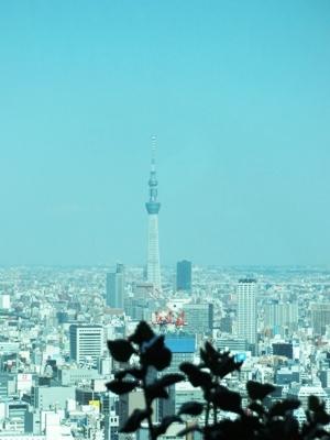 D4TOKYO すみれ家(汐留シティセンタービル41F)より望む東京スカイツリー