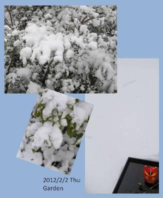 le2février2012_雪の朝