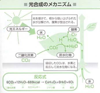 光合成.JPG