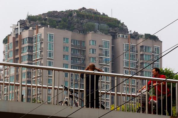 中国 ビルの屋上 木