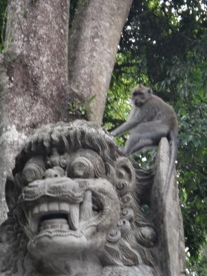 ウブドサル猿