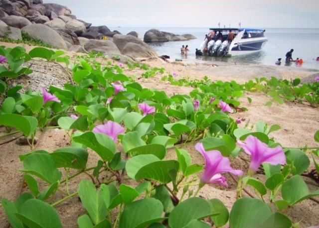 今日のサムイ島