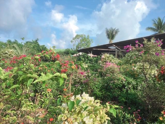 サムイ島のお天気おいしいもん日記