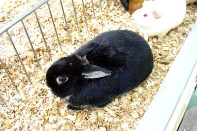 上野動物園のクロウサギだぴょ〜ん