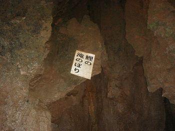 牡鹿洞鯉の滝登り