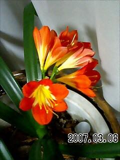 20070321_317631.jpg