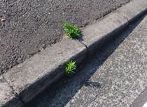 草が生きる
