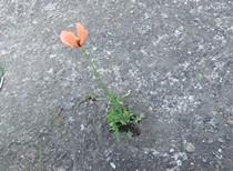 花が生きる