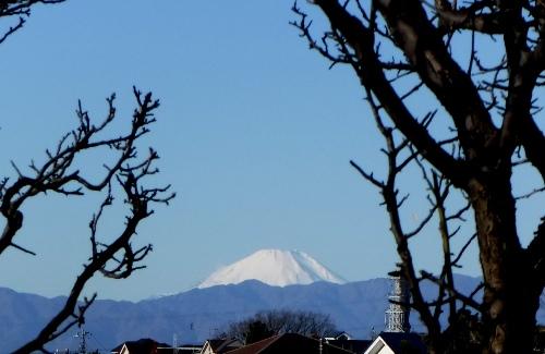 やはり富士山です