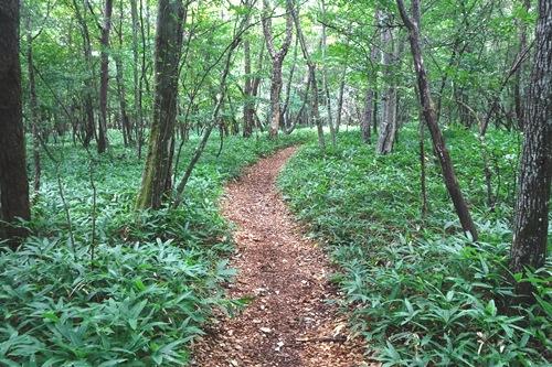 森林を歩く