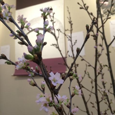 IMG_3693生け込み桜桜塩.JPG