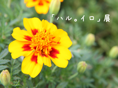 by Canon EOS 40D
