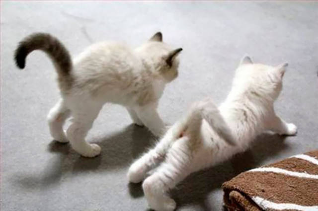 these_animals_were_born_to_do_yoga_640_41.jpg