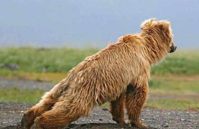 these_animals_were_born_to_do_yoga_640_38.jpg