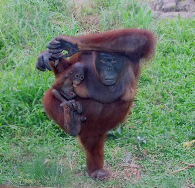 these_animals_were_born_to_do_yoga_640_36.jpg