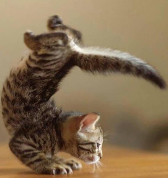 these_animals_were_born_to_do_yoga_640_29.jpg