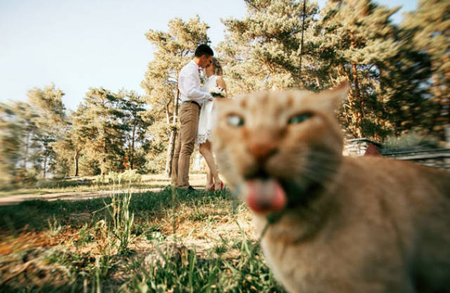 these_kitties_think_photobombs_need_to_be_renamed_into_photocats_640_35.jpg