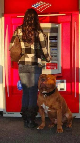 when_afraid_to_withdraw_money_from_an_atm_take_your_giant_dog_with_you_640_02.jpg