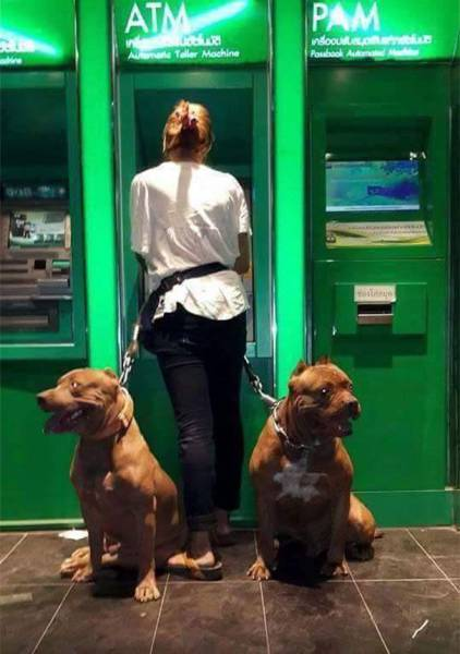 when_afraid_to_withdraw_money_from_an_atm_take_your_giant_dog_with_you_640_04.jpg