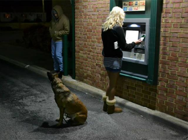 when_afraid_to_withdraw_money_from_an_atm_take_your_giant_dog_with_you_640_06.jpg