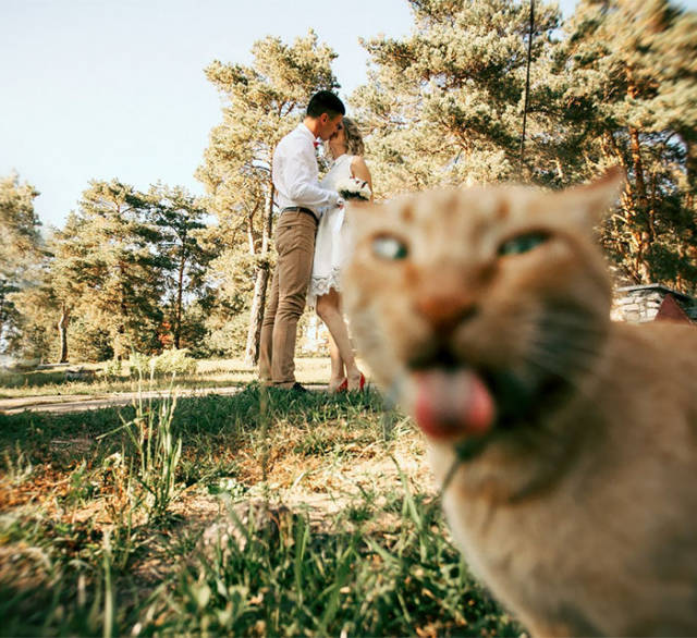 hilarious_examples_of_unexpected_wedding_photobombs_640_39.jpg