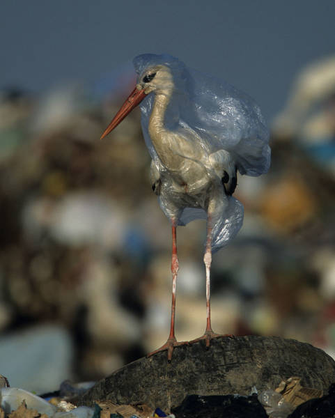 tragic_truth_about_how_dangerous_plastics_are_to_our_planet_640_02-1.jpg