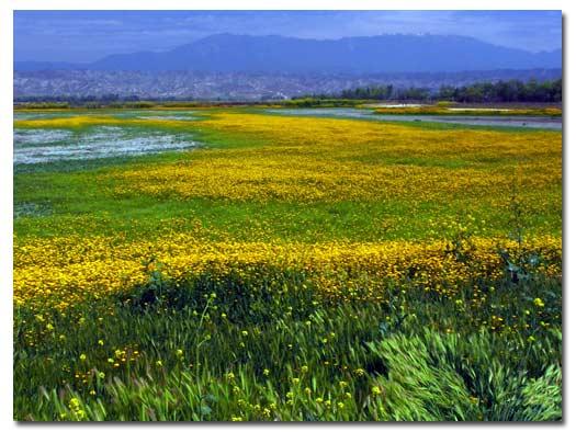 wildflowers258666993.jpg