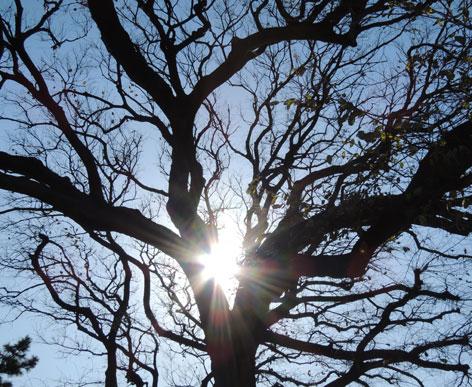 元旦木と光