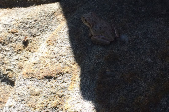 お墓のすぐ横にいた蛙