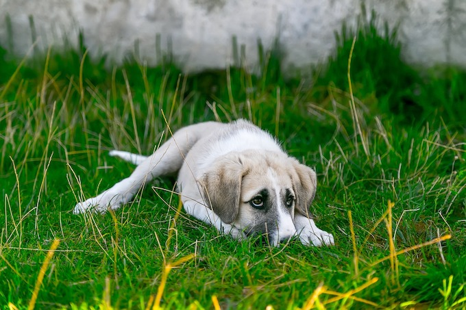 dog-2723082_1280のコピー.jpg