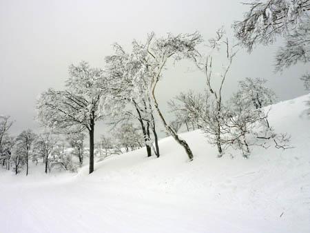 スキージャム勝山雪景色