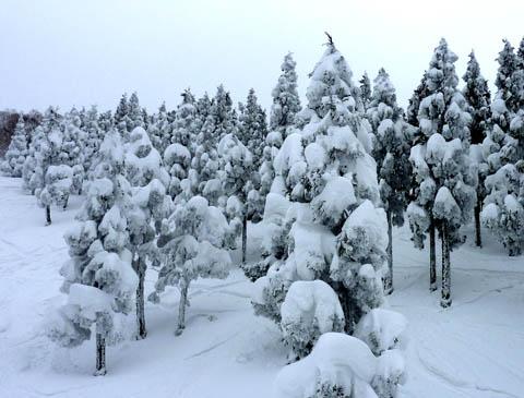 スキージャム勝山樹氷