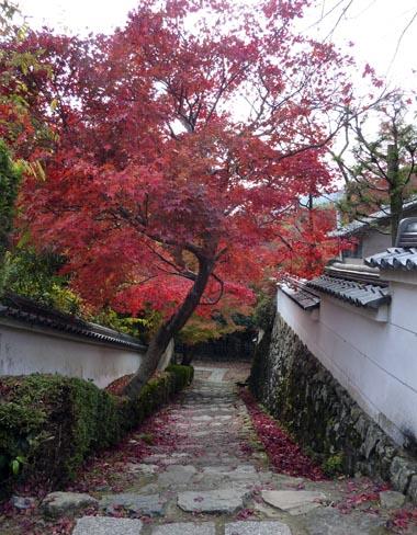 花の寺02