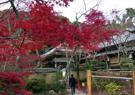 花の寺03
