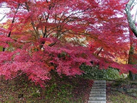 花の寺09