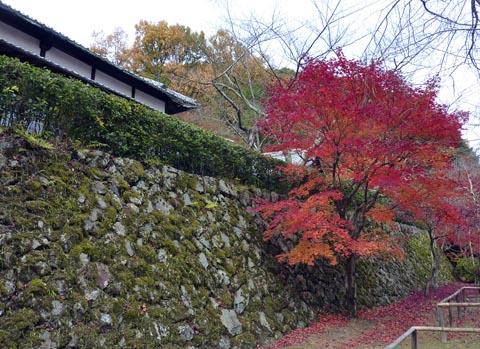 花の寺10